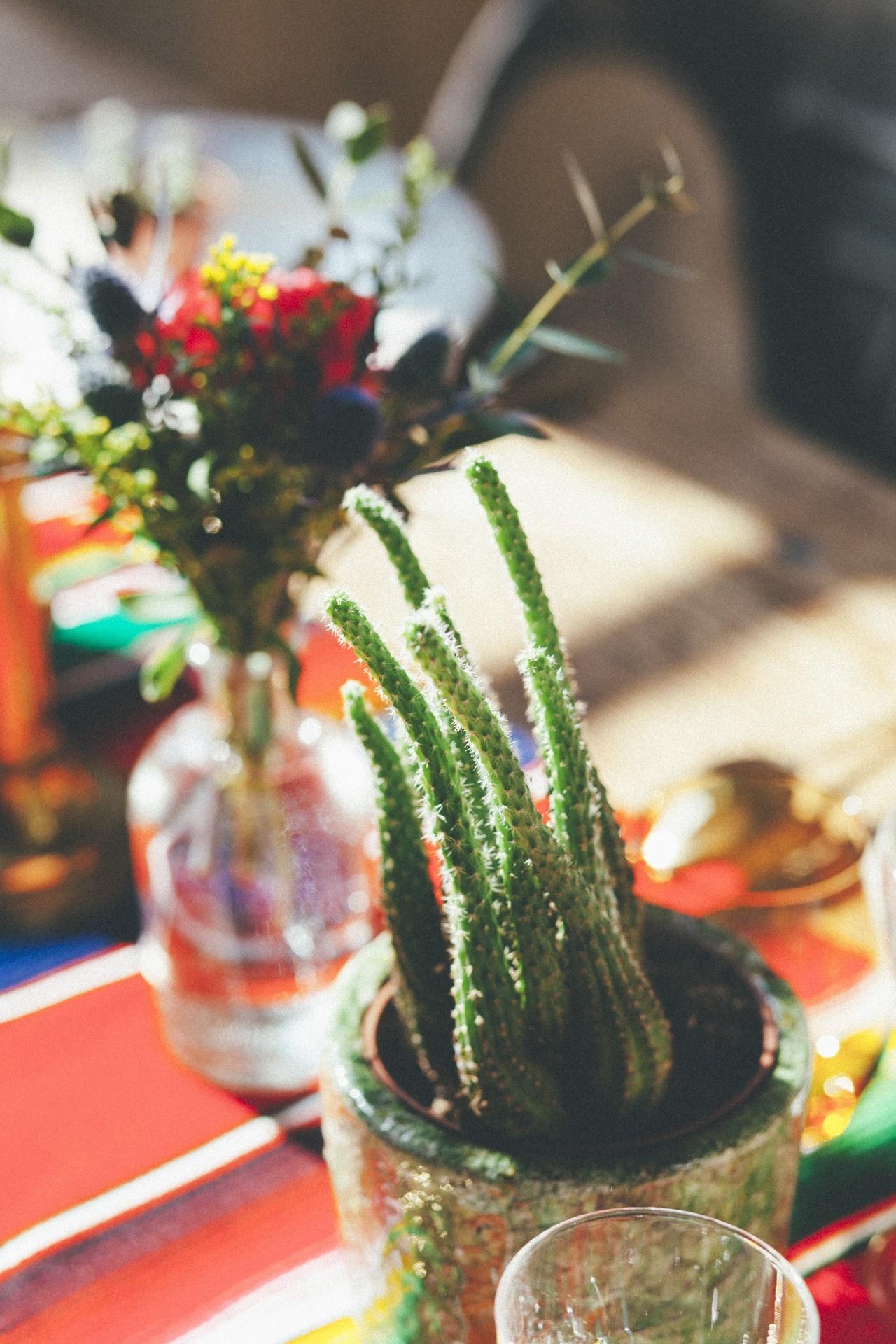 decoration mariage succulente et cactus