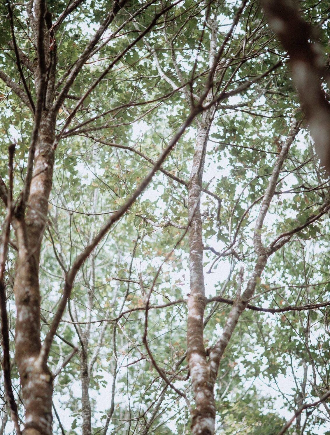 arbre de la forêt du gavre